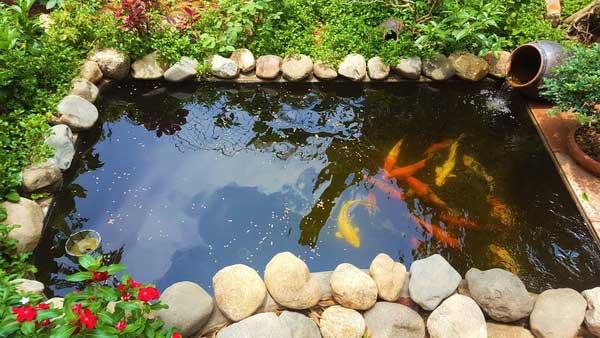 Các Cách làm hồ cá bằng gạch đơn giản mà ai cũng thực hiện được