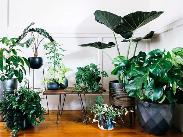 Tips trang trí cây xanh trong nhà không thể bỏ qua 3
