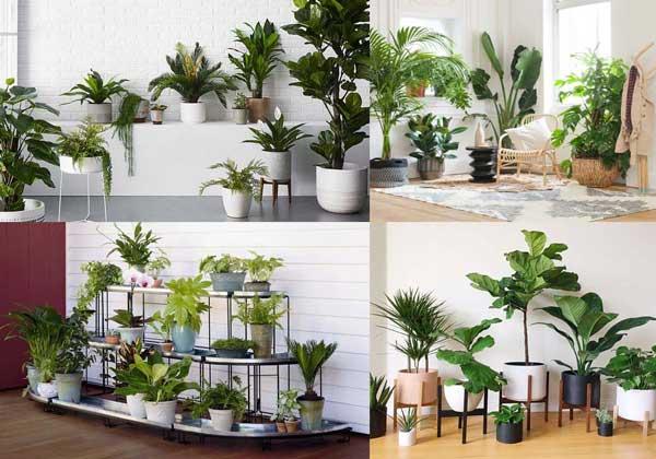 Tips trang trí cây xanh trong nhà không thể bỏ qua 4